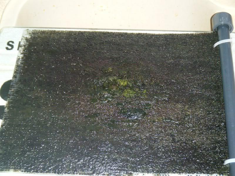 Algae scrubber 14